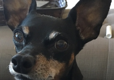 Pet Dog Dax