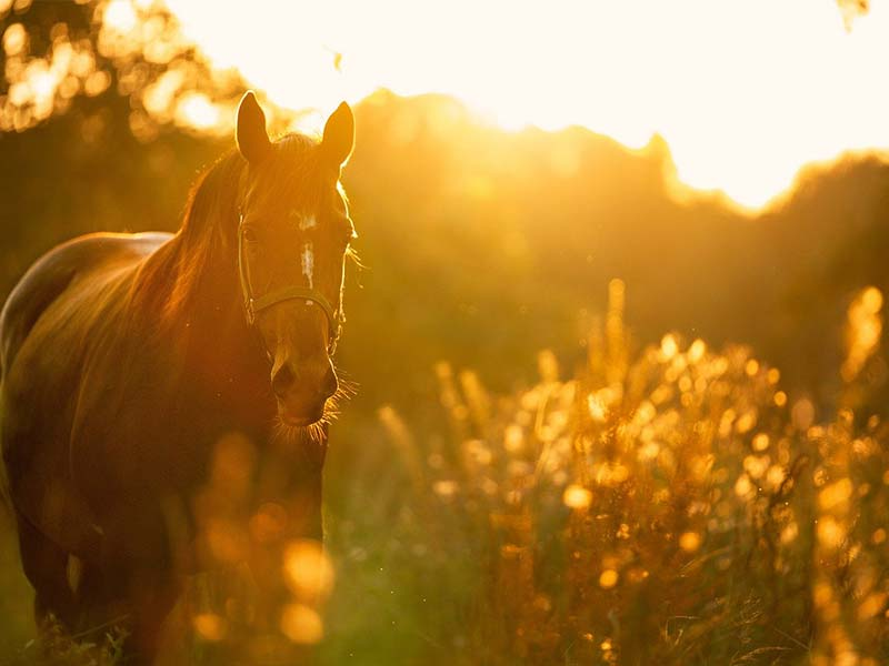 How To Deal With The Death Of Your Horse