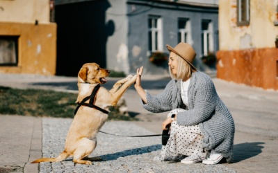 How To Achieve Self-Forgiveness From Pet Loss
