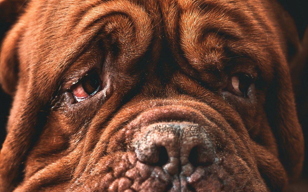 Signs That Tell You Your Pet Is Nearing the End Of Its Life