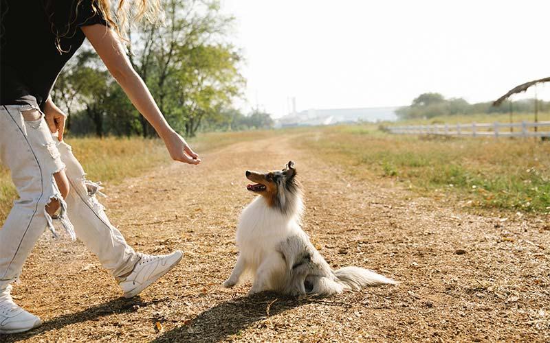 Pet Memorial Activities