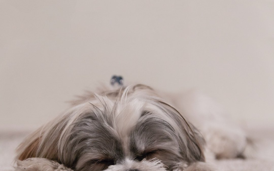What You Need to Know About Home Burials for Your Pet Dog