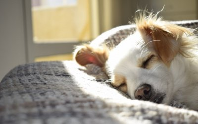 Things to Take Care Of If Your Pet Dog Passes Away At Home